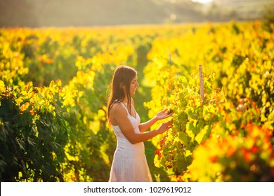 Smiling elegant woman in nature.Joy and happiness.Serene female in wine grape field in sunset.Wine growing field.Agricultural tourism.Visiting winery and vineyards.Wine expert,sommelier.Wine steward