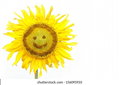smiling face of sunflower isolated on white background