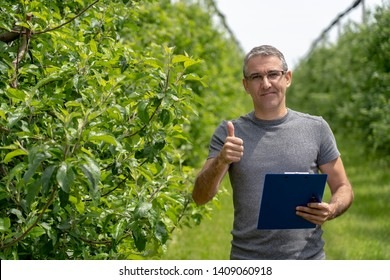 Smiling Farmer With Clipboard in an Orchard Giving Thumb Up. Apple Orchard With Hail Protection Nets. Agronomist Standing in Green Orchard, Looking at Camera and Showing Thumb Up.