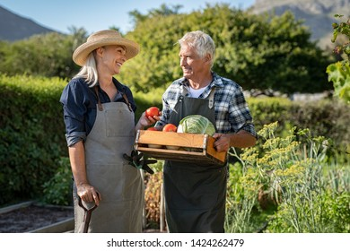 Smiling farmer holding vegetables basket while talking to his wife. Smiling farmers couple wearing apron with vegetables in basket. Senior gardener man and mature woman in conversation after harvest.