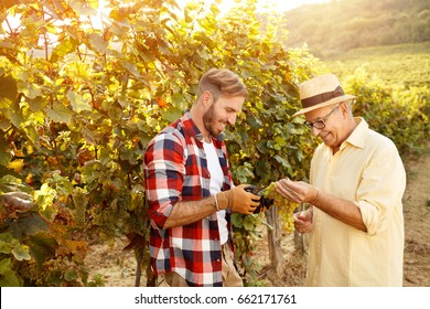 smiling father and his son is picking grape in vineyard