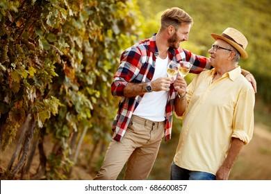 smiling father and son vintner harvest wine in vineyard