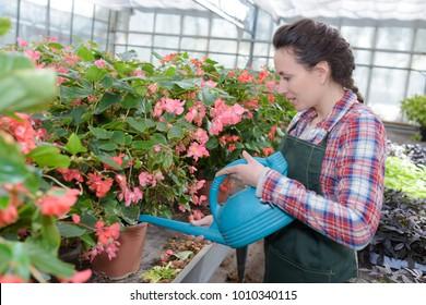 smiling gardener watering plants nursery
