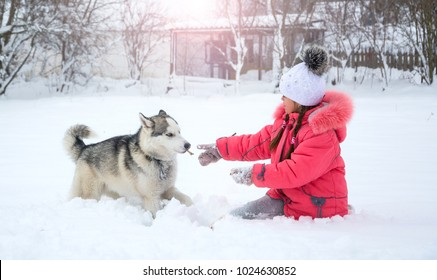 ebd42b86796 A smiling girl is feeding a Husky dog in the countryside. Little girl  playing with