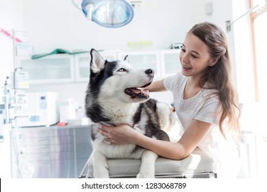 Smiling girl looking at husky on bed at clinic