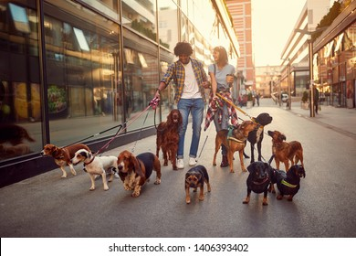 Smiling girl and man dog walker in the street with lots of dogs