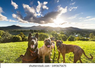 Smiling group of various dogs looking at camera in front
