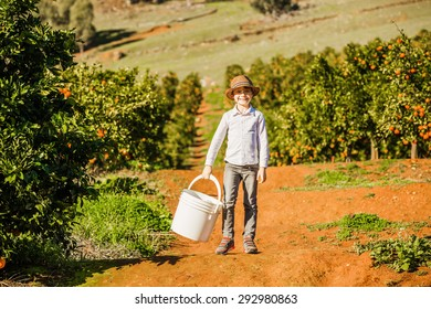Smiling happy healthy boy on citrus farm holding white bucket ready to pick oranges, mandarins and lemons