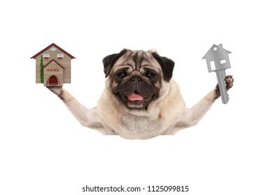 smiling happy pug puppy dog holding up house key and miniature house, isolated on white background
