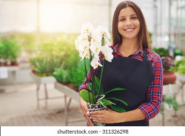 Smiling happy young florist in her nursery standing holding a potted white Phalaenopsis orchid plant in her hands as she tends to the houseplants in the greenhouse