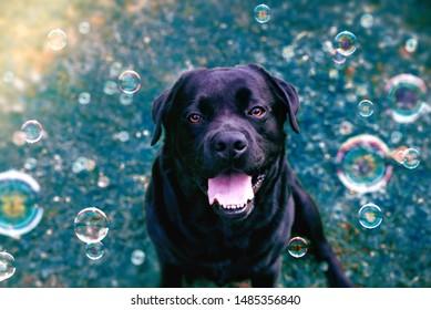 Photos Images Et Photographies De Stock De Buble Shutterstock