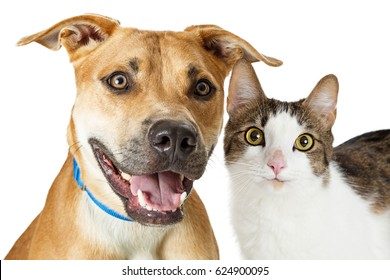 Smiling Large Dog and Cat Together