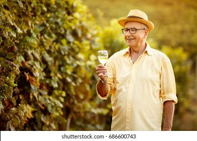 Smiling male vintner harvest wine in vineyard