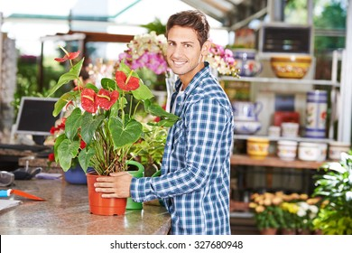 Smiling man buying a flamingo flower in a pot in a nursery shop