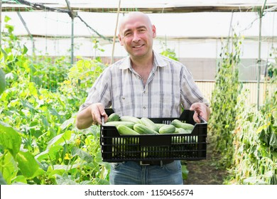 Smiling man  horticulturist holding crate with cucumbers in  sunny hothouse
