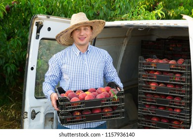 Smiling man  professional horticulturist packing crates  with tasty peaches to car