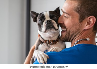 Smiling man vet in blue uniform cuddling boston terrier breed dog. Young doctor carrying and playing with little dog after treatment. Closeup face of puppy while doctor embrace and take care of it.