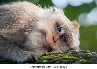 Image result for smiling monkey