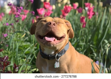 Smiling Pit Bull among the Flowers