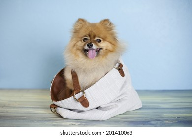 Royalty Free Doggie In A Purse Stock Images Photos Vectors