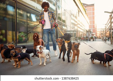 Smiling professional dog walker man in the street with lots of dogs