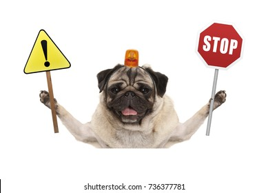 smiling pug dog holding up red stop sign  and yellow exclamation mark sign, with orange flashing light on head, isolated on white background