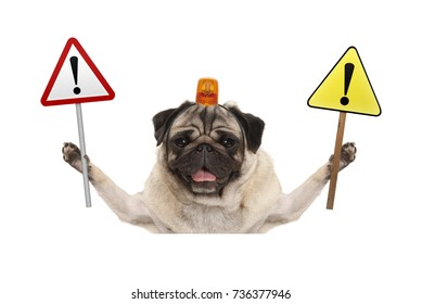 smiling pug dog holding up stop sign and yellow  exclamation mark sign, with orange flashing light on head, isolated on white background