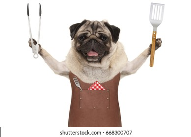 smiling pug dog wearing leather barbecue apron, holding meat tong and spatula, isolated on white background