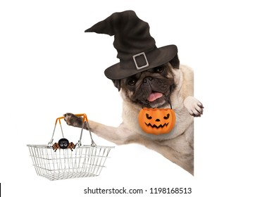 smiling pug puppy dog holding up metal grocery basket, wearing witch hat and carved pumpkin lantern, behind white banner, isolated
