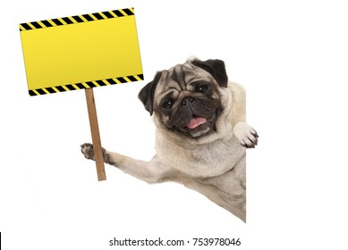 smiling pug puppy dog holding up rectangular blank yellow warning sign, isolated on white background