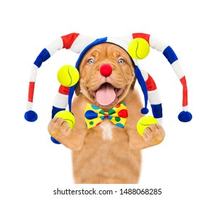Smiling puppy dressed as a clown juggles with tennis balls. isolated on white background