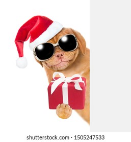 Smiling puppy with sunglasses in red christmas hat holding gift box and peeking behind empty white banner. isolated on white background.