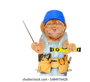 Smiling puppy worker  with blue cap and tool belt holding spirit level and pointing away on empty space.  Isolated on white background.