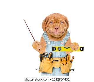 Smiling puppy worker  with tool belt holding spirit level and pointing away on empty space.  Isolated on white background.