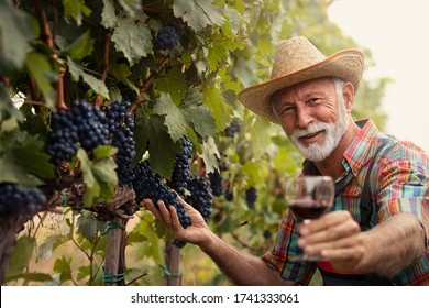 Smiling senior winemaker with white beard with glass of white wine in vineyard