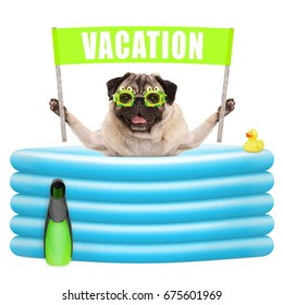 smiling summer pug dog with goggles,flipper and banner sign with text vacation in inflatable pool, isolated on white background