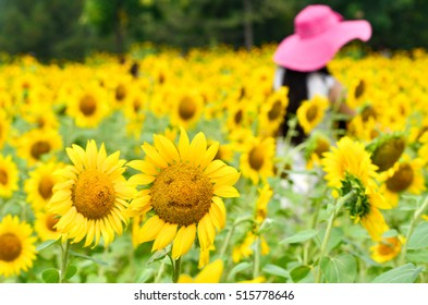 A smiling sunfloer and a lot of sunflowers backgroud,and a virtual red hat girl.