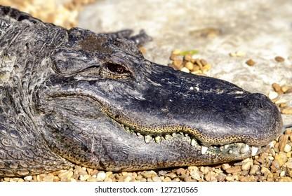 smiling swamp creature