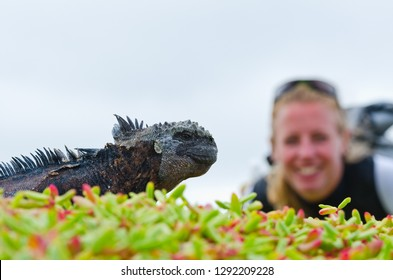 A smiling tourist observes a marine Iguana in the Galapagos