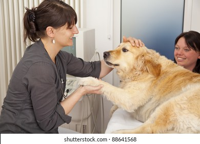 smiling veterinarian fondling a golden retriever to becalm it for an upcoming ultrasonic examination