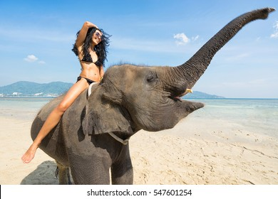 Smiling woman in bikini  on elephant on the beach. Tropical vacation.