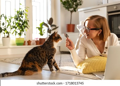 Smiling woman freelancer lies on the carpet in living room, plays with cat a toy mouse at home, working on laptop during lockdown due to coronavirus. Quarantine life, self-isolation, love pets.