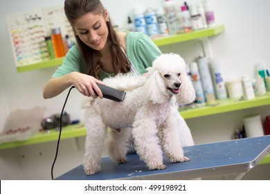 smiling woman haircut white poodle in hair service