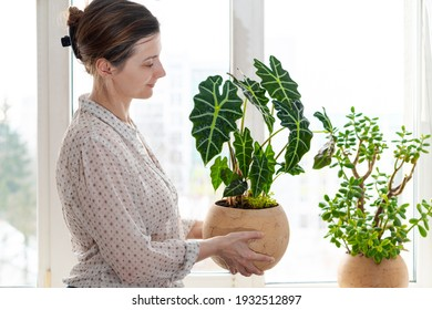 Smiling woman holding ceramic rounded pot with Alocasia Polly, Amazonian Elephant Ear near the window. Indoor potted fresh plants on the windowsill in the sunlight.