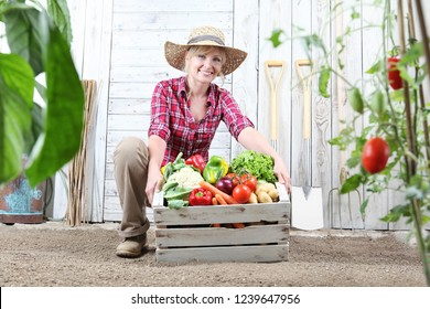 smiling woman in vegetable garden with wooden box full of vegetables on white wall background with work tools