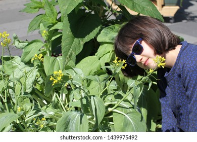 smiling young child with sunglasses looking at a homegrown mustard plant with yellow flowers in a city garden, balcony or street, sunlight