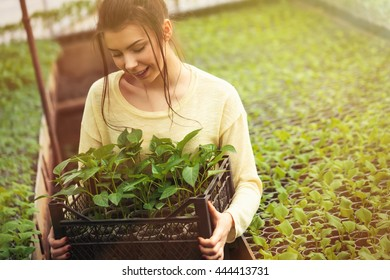 Smiling young farmer woman hold box of fresh green seedlings.Plants in greenhouse.Young farmer girl happy with vegetable harvest grown in cultivated land.bright sun in hothouse farm
