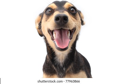 Smiling young mixed breed dog