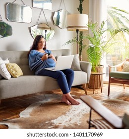 Smiling young pregnant woman sitting on her living room sofa at home using a laptop and drinking an herbal tea
