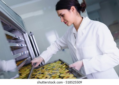 Smiling young woman food expert putting sliced apples in food drying chamber
